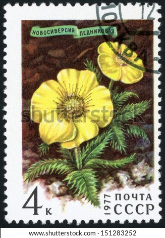 RUSSIA - CIRCA 1977: post stamp printed in USSR (CCCP, soviet union) shows image of novosieversia glactalis (glacialis)from Siberian flowers series, Scott 4567 A2166 4k brown yellow green, circa 1977 - stock photo