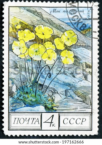 RUSSIA - CIRCA 1975: post stamp printed in USSR (CCCP, soviet union) shows image of polar poppies (papaver radicatum), Taiga from regional flowers series, Scott catalog 4394 A2090 4 yellow, circa 1975 - stock photo