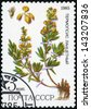 RUSSIA - CIRCA 1985: post stamp printed in USSR (CCCP, soviet union) shows yellow plant of Thermopsis lanceolata from series: medicinal plants from Siberia,  Scott catalog 5380 A2577 3k, circa 1985 - stock photo