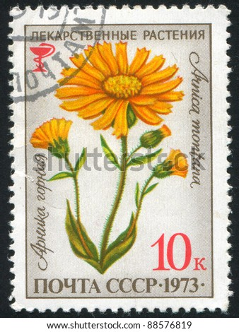 RUSSIA - CIRCA 1973: stamp printed by Russia, shows flower, Arnica montana, circa 1973.