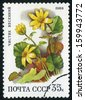 RUSSIA  - circa 1988: stamp printed by Russia, shows flower circa 1988 - stock photo