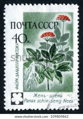 RUSSIA - CIRCA 1960: stamp printed by Russia, shows flowers Ginseng, circa 1960