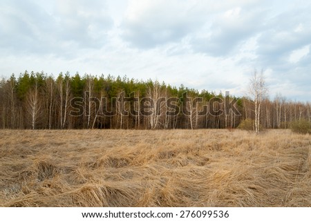 Russia. Spring landscape. Forest, birch, dry grass. - stock photo
