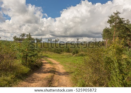 Russia. Summer landscape with the road in the woods