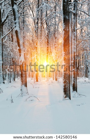 Russia, the sun's rays during the winter dawn in the forest - stock photo