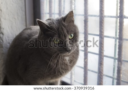 Russian cat on window