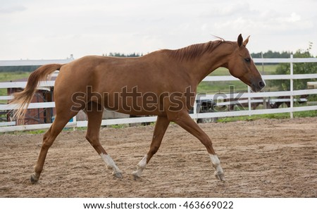 nice brown horses standing horses stock photo 403375318 shutterstock