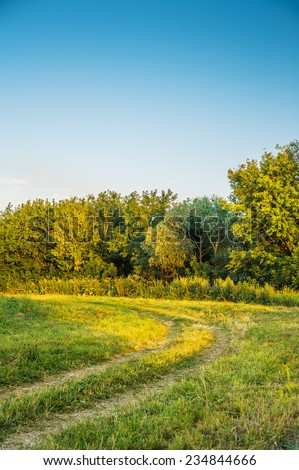 Russian field and forest in sunny summer day. - stock photo