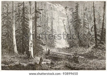 Russian fir forest old illustration. Created by Moynet, published on Le Tour du Monde, Paris, 1867 - stock photo
