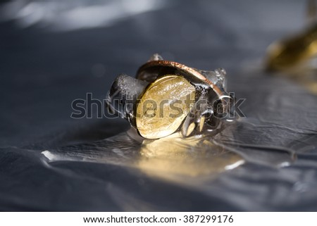 Russian money coins encased in ice