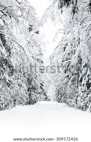 russian winter forest road in snow - stock photo