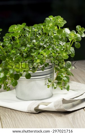 Rustic metal container with fresh organic herbs for used as an aromatic seasoning in cooking and salads standing on a wooden table - stock photo