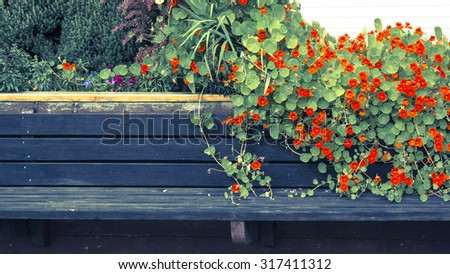 Rustic painted wooden bench with nasturtium flowers with vintage coloration. - stock photo