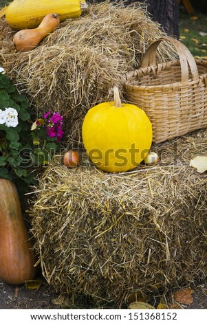 Rustic still life with pumpkin.  - stock photo