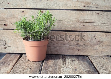 Rustic table with lavender in pot - stock photo