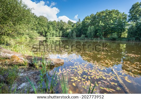 Rustic view on a small Dutch lake with leaves of aquatic plants in the mirror smooth water surface and in the foreground reeds and a fallen tree trunk. - stock photo