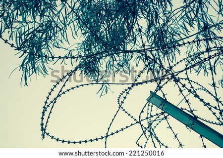 Rusty barbed and a tree. War and imprisonment concepts. Aged photo.  - stock photo