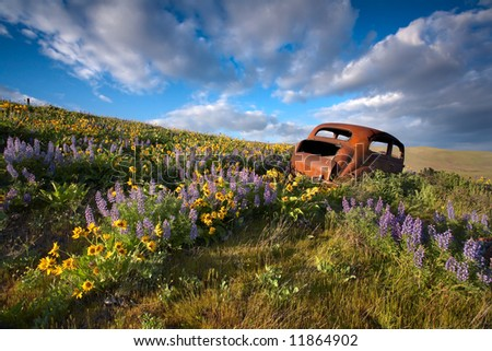 Rusty Car in a Field of Wildflowers - stock photo