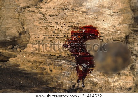 rusty nail on wood with blood drips - stock photo