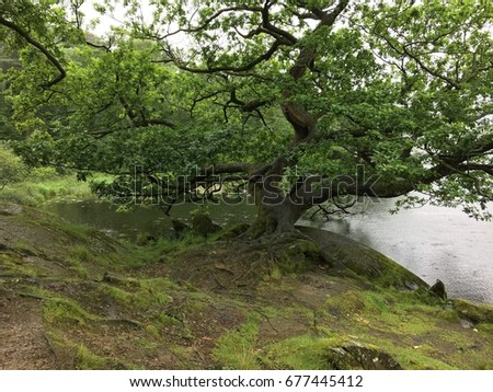 Rydal Water trees