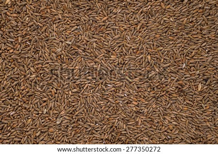 rye grain for the background - stock photo