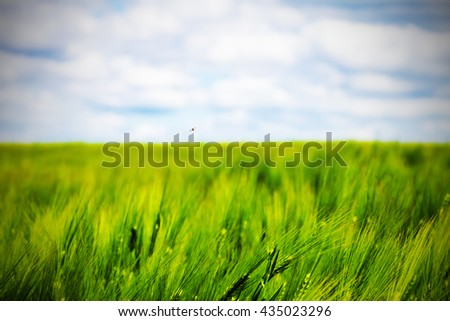 rye wheat field and blue sky with clouds background - stock photo