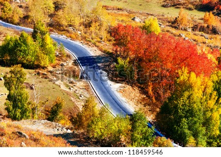 S curve on a forest road in the autumn - stock photo