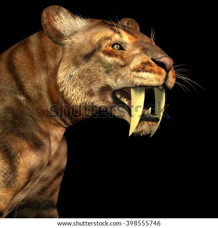Saber-tooth Cat on Black 3D illustration - The Saber-tooth Cat also called Smilodon was a large predator that lived in the Eocene to Pleistocene Eras in North and South America. - stock photo
