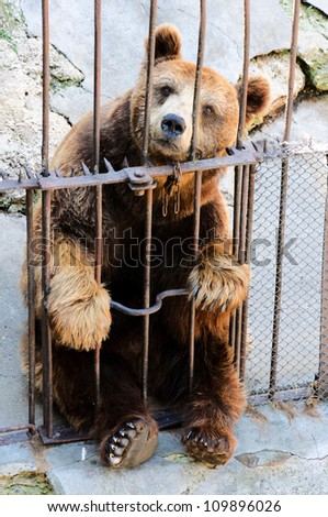 Sad bear sitting in a cage - stock photo