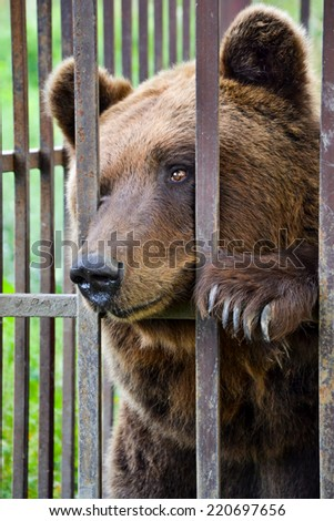 Sad brown bear in a cage. - stock photo