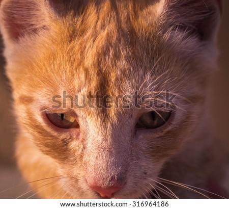 cat t tourniquet