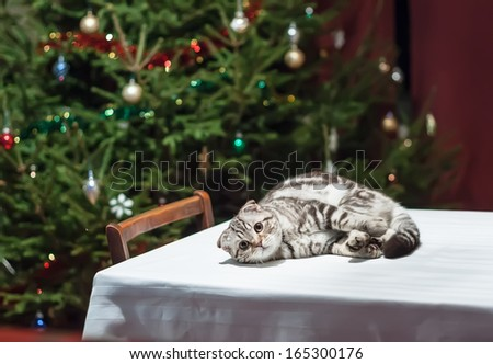 Sad cat lies on an empty celebratory table with Christmas tree in the background in anticipation of Christmas and New Year - stock photo