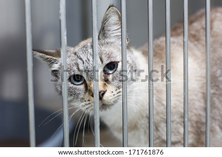 Sad cat with big eyes in a cage - stock photo