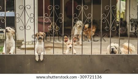 Sad dirty dog  on fence ,  vintage style - stock photo