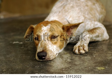 Sad Dog - stock photo