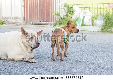 Sad dog and friend in-THAILAND.