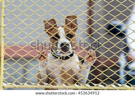 Sad dog behind a fence