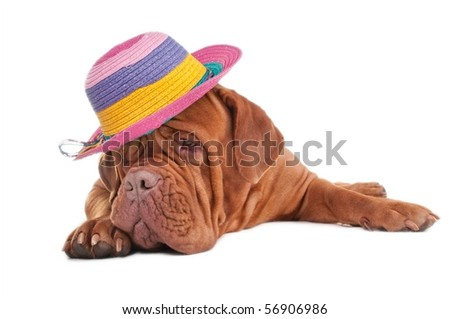 Sad dog counting the days remaining till summer holidays - stock photo