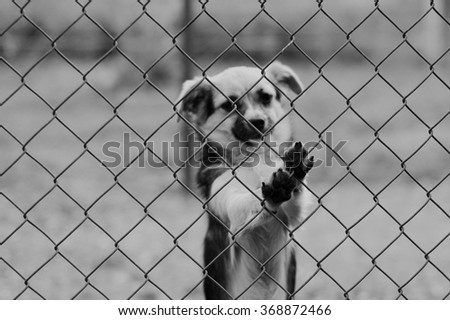 Sad dog in black and white imprisoned with paws - stock photo