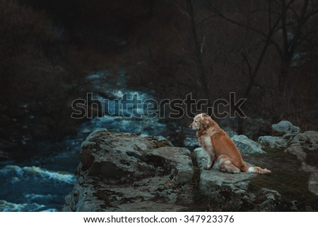 Sad dog is sitting on the edge of a precipice. At the bottom of the chasm the river flows. - stock photo