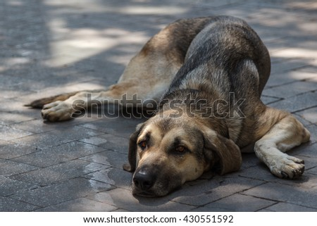Sad dog laying on a street of Palermo, Sicily, Italy