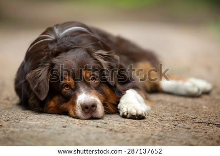 Sad dog lying on the ground - stock photo