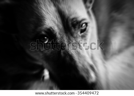 Sad dog motion photo,  black and white filter effects,blurry,selective focus - stock photo