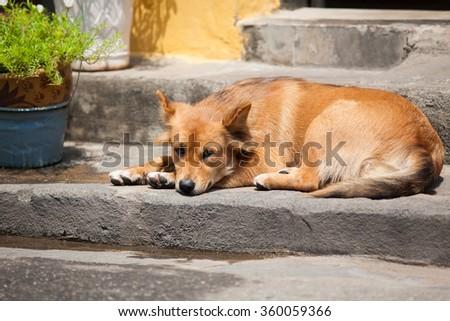 sad dog on the street - stock photo