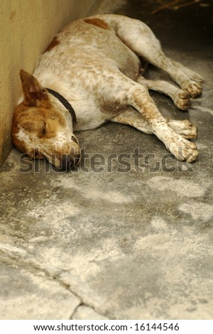 Sad Dog Sleeping - stock photo