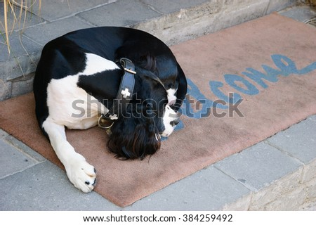 Sad dog waiting for his owners on  Welcome home on brown mat. - stock photo