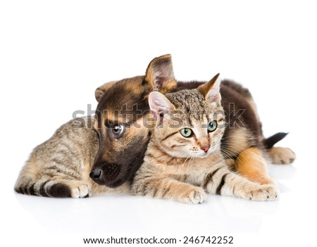 sad dog with cat lying together. isolated on white background - stock photo