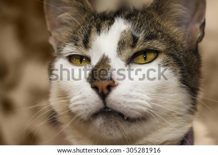 Sad domestic cat looking unhappily