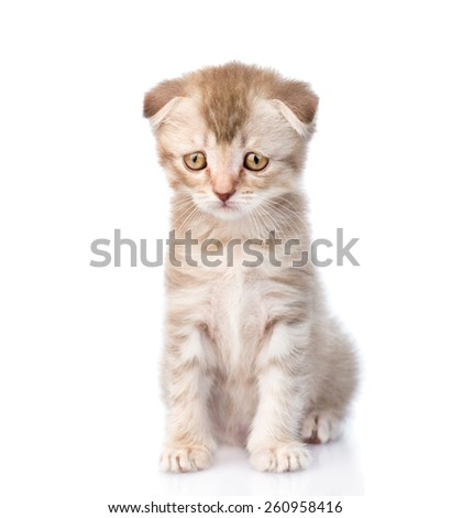 Sad flap-eared kitten. isolated on white background - stock photo