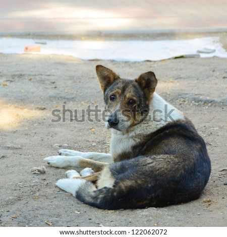 Sad homeless dog - stock photo
